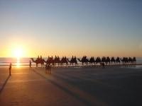 camel trek cable beach