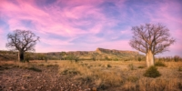 Trees with sunset sky in outback Western Australia