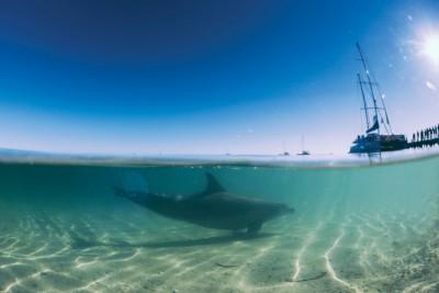 Monkey Mia Dolphin Mandatory credit: Tourism Western Australia