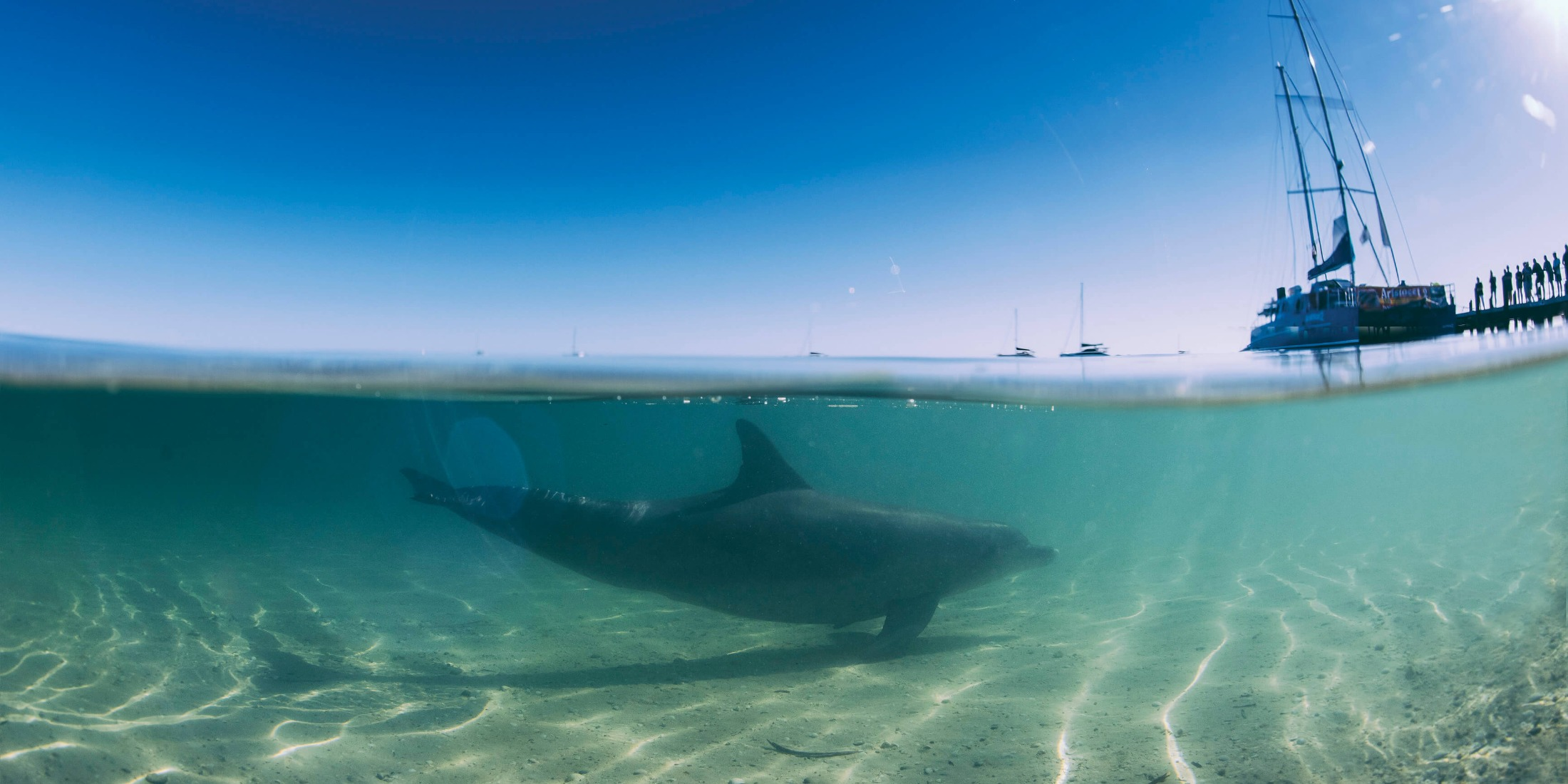 Dolphin at Monkey Mia, located in the Shark Bay World Heritage Area. credit: Tourism Western Australia