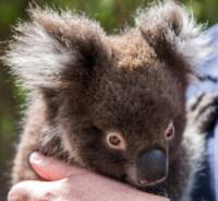 Kangaroo Island Wildlife Park Mandatory Credit Tourism Australia
