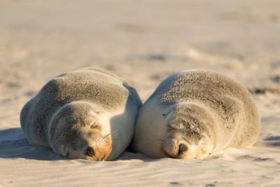 Seal Bay Conservation Park Mandatory Credit Chris Bray