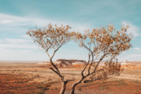 Kanku-Breakaways Conservation Park Mandatory Credit Elise Cook