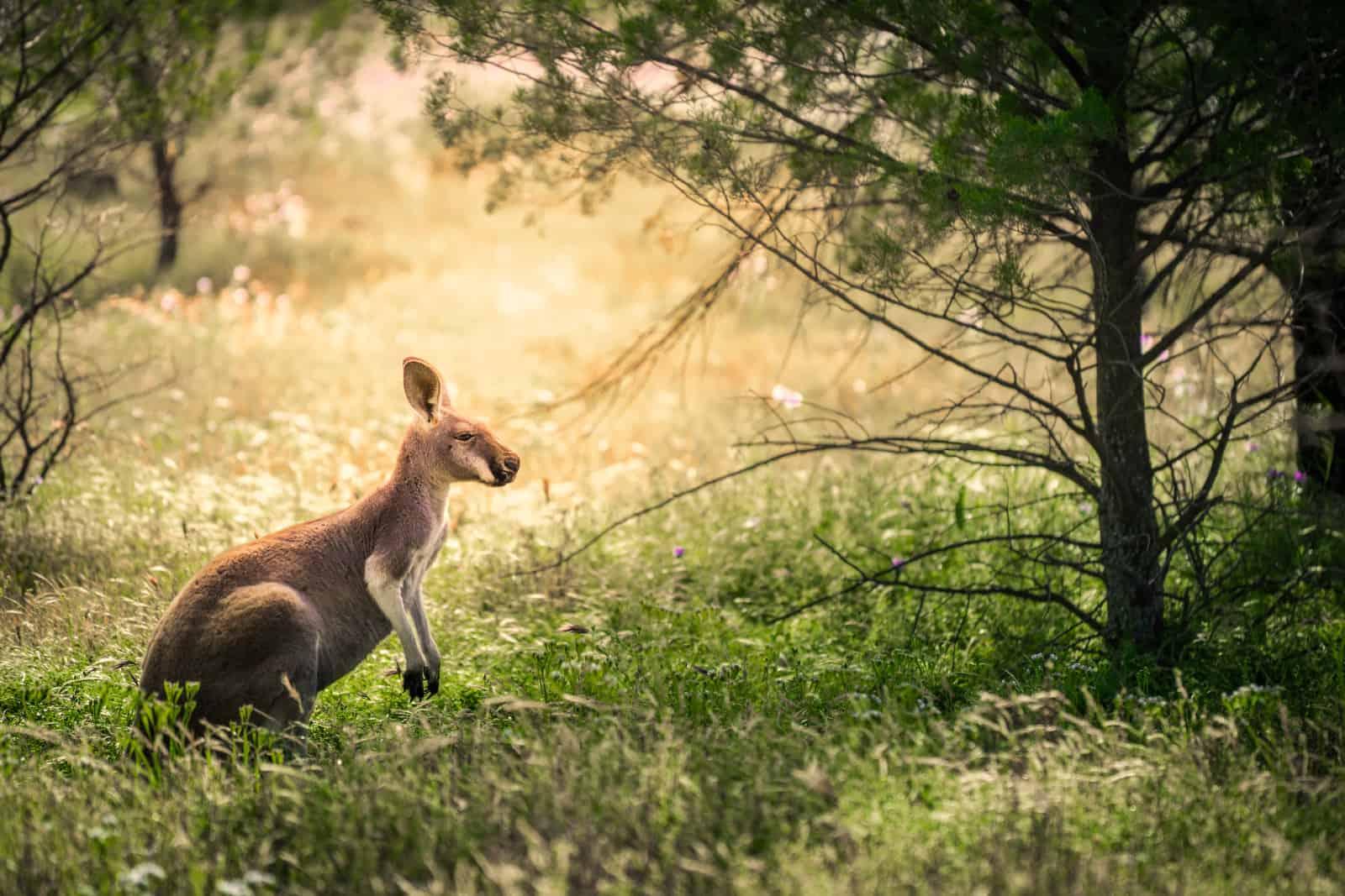 Flinders Ranges National Park Mandatory Credit Ben Goode